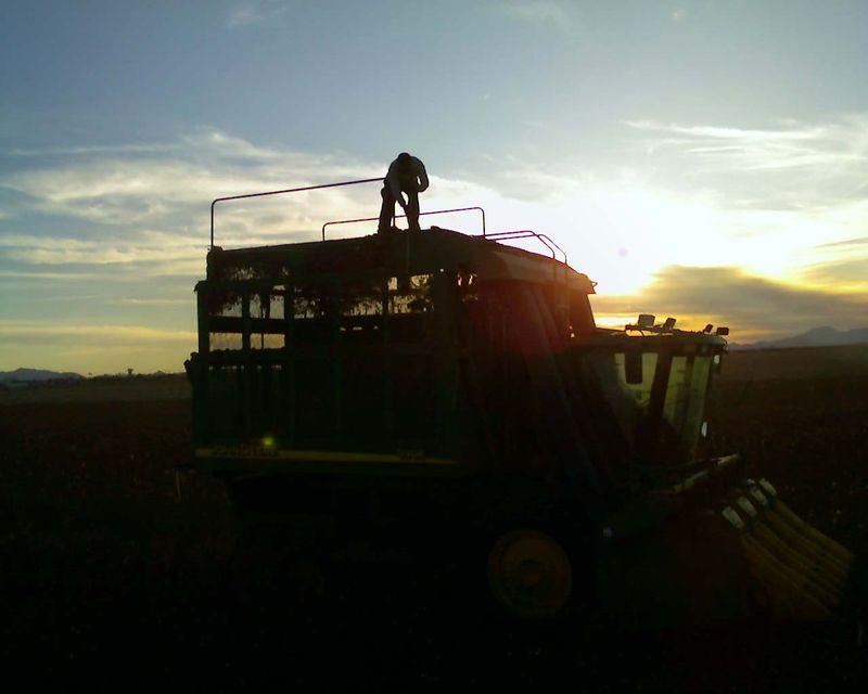 Sunsetpicker